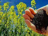 خرید ۱۳۰۰۰ تن دانه روغنی کلزا در گلستان