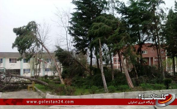 درختان کردکوی5