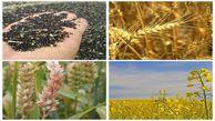 پیش بینی برداشت یک میلیون و ۲۰۰هزار تُن محصول کشت پاییزه در گلستان
