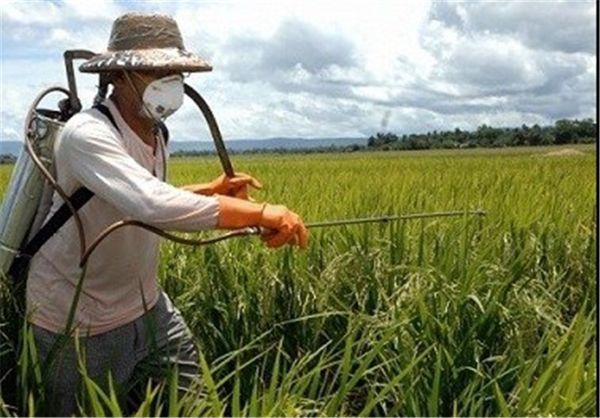 تغییر رفتار حشرات و آفات کشاورزی را در پی خشکسالی/ هشدار به کشاورزان برای پایش مزارع