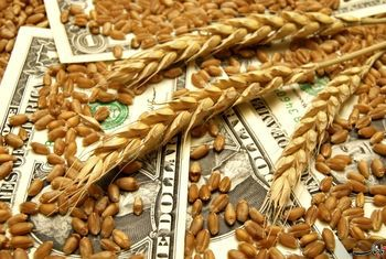 قیمت انواع بذر اعلام شد