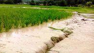 خسارت حدود ۶ میلیارد تومانی سیل به بخش کشاورزی مینودشت