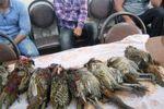 سه شکارچی غیرمجاز در گنبدکاووس و آزادشهر دستگیر شدند