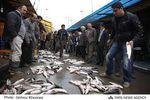 اختلاف شهرداری بندر ؛این بار با ماهی فروشان