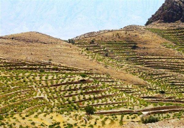 اراضی شیبدار آزادشهر تبدیل به باغ میشود