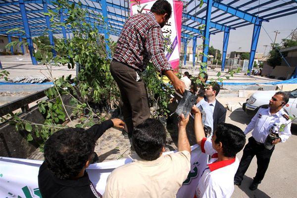 توزیع نهال رایگان در گرگان به مناسبت روز درختکاری