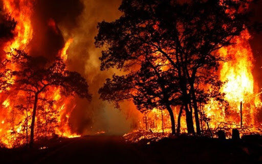 جنگلهای سوزنی برگ گلستان مخزن باروت است؛ چالش کمبود اعتبار