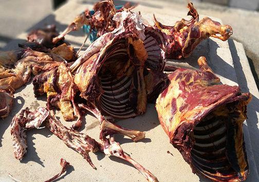 کشف گوشت الاغ در قصابی + تصاویر