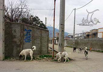 """وحشت مردم از اکران """" سگکشی """" در گالیکش"""