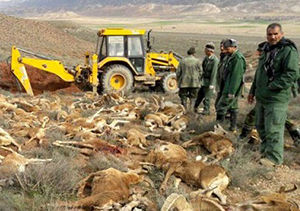 علت دقیق مرگ وحوش در پارک ملی گلستان نامشخص ماند
