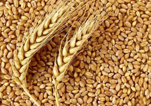 پرونده گندم های مفقودی گلستان تعیین وقت شد