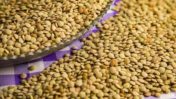 امسال ۴۰۰ تن عدس در گلستان تولید میشود
