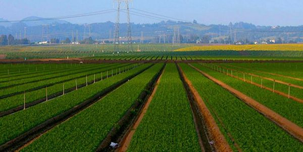 صدور مجوز فعالیتهای کشاورزی برای جذب سرمایههای مردمی سرعت مییابد