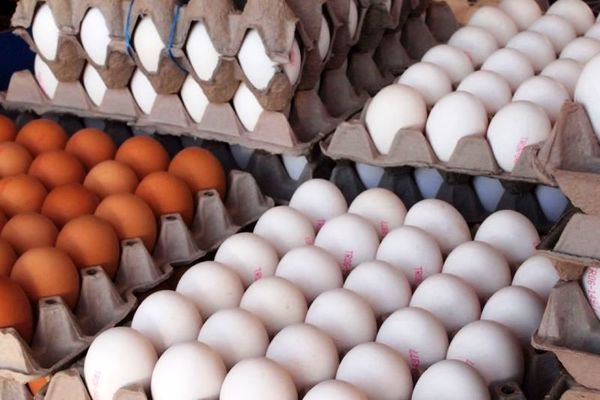افزایش قیمت تخم مرغ در گلستان/ واحدهای تولیدی به تعهدات خود عمل نکردند