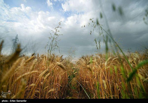 ۱۰۸ میلیارد تومان مطالبات کشاورزان جوکار گلستان پرداخت شد
