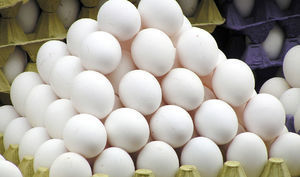 کاهش قیمت تخممرغ در راه است