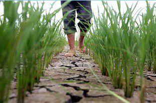 استفاده بیش از 88 درصد آب های زیرزمینی گلستان در بخش کشاورزی