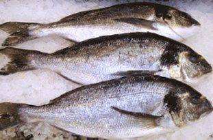 تمدید زمان صید ماهیان استخوانی تا 31 فروردین