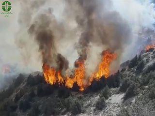 عاملان آتش سوزی جنگلهای کردکوی شناسایی می شوند