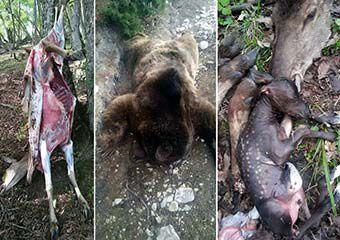 خط و نشان مدیرکل محیطزیست گلستان برای شکارچیان غیرمجاز؛ رصد جنگلها توسط پهپاد
