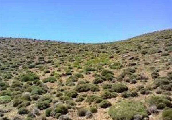 ۳۰۰ هزار هکتار از اراضی استان گلستان در معرض خطر بیابان شدن قرار دارد