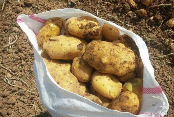 اعلام قیمت نرخ سیب زمینی