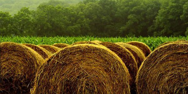 برداشت ۱۷۸ هزار تن نباتات علوفهای از اراضی گلستان