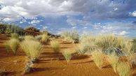 اختصاص اعتبار ۸ میلیاردتومانی برای مقابله با بیابانزایی در گلستان