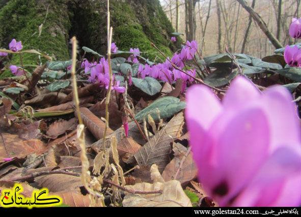 عکس های نگون سار