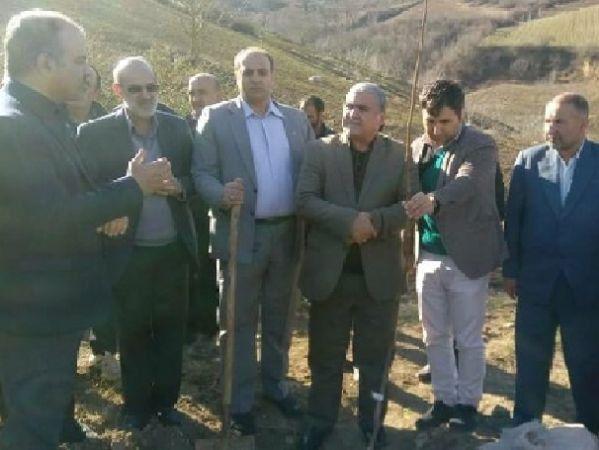 کاشت ۶ هکتار نهال گردو در اراضی شیب دار موقوفات مینودشت