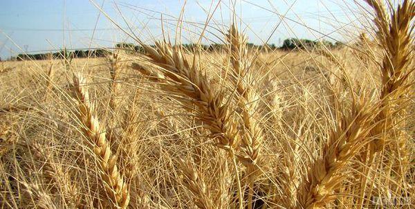 منابع خرید تضمینی محصولات اساسی کشاورزی در لایحه بودجه تقویت شود