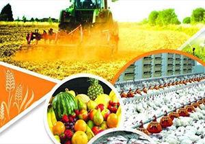 سرمایه گذاری ۹۵میلیارد تومانی برای افزایش ظرفیت فرآوری محصولات کشاورزی