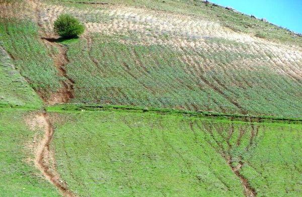 ایجاد باغ های مثمر در اراضی شیبدار، اقتصادی تر از زراعت گندم، جو است
