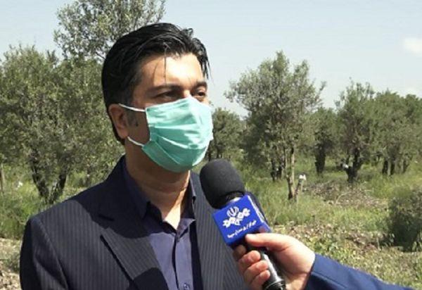 توزیع کود های پرمصرف وپیش بینی برداشت ۲۸هزار تُن آلو در گلستان