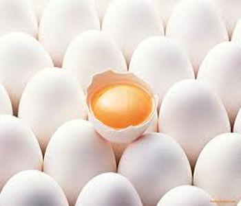 روزانه ۱۶ تن تخم مرغ در گرگان توزیع می شود