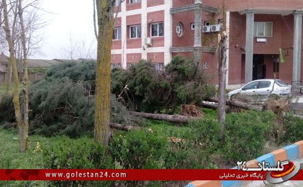 درختان کردکوی2