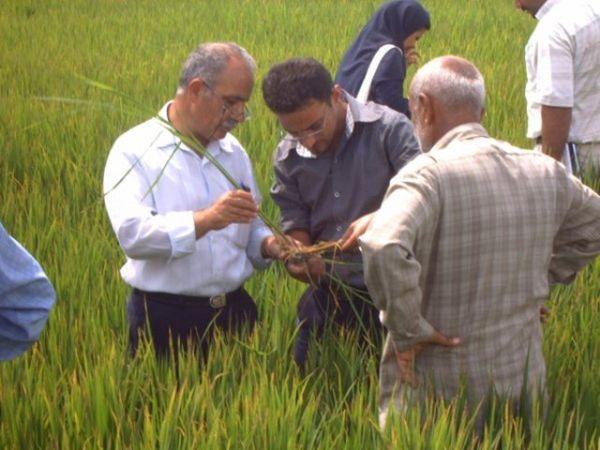 60درصد مهندسان کشاورزی گلستان در انتظار شغل پایدار
