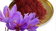 پیش بینی تولید بیش از ۲ تن گل زعفران در آزادشهر