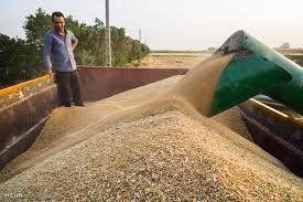 پیگیری لحاظ شدن کیفیت گندم در قیمت خرید تضمینی