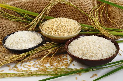 نبود نظارت دستگاهها عامل اصلی اختلاف قیمت برنج از مزرعه تا سفره!