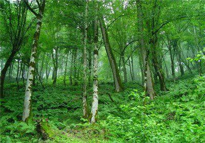 تغییر اقلیم و خشکسالی، جنگلهای گلستان را تهدید میکند