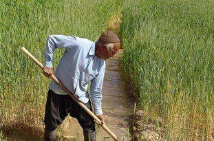 بیمه تأمین اجتماعی کشاورزان به شرط حضور در زمین کشاورزی