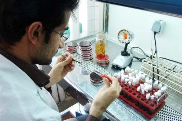 راهاندازی مرکز رشد واحدهای فناور شرق گلستان در یایان دهه فجر