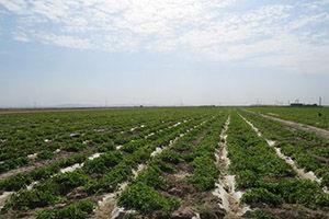 بازپس گیری بیش از ۳۰ هزار متر مربع اراضی ملی از یک زمین خوار