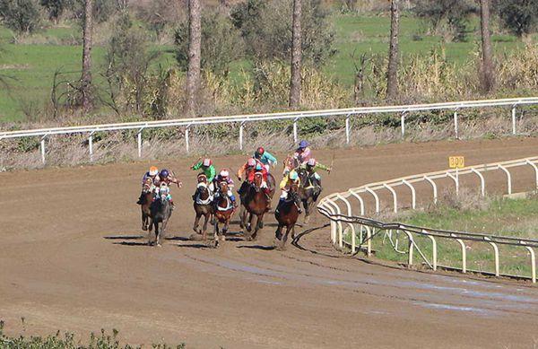 55 راس اسب در هفته دهم مسابقات کورس گنبدکاووس رقابت کردند