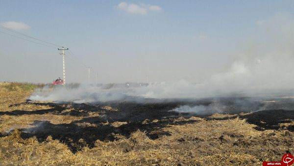 کاهش ۴۰ درصدی آتش سوزی مزارع کشاورزی در گلستان