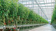 ۵۰۰ هکتار گلخانه با سرمایهگذاری صندوق توسعه ملی در گلستان ایجاد میشود
