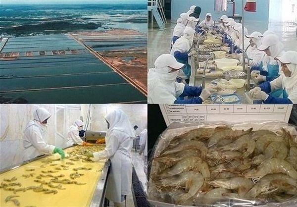 تولید میگو در استان گلستان ۶۵ درصد افزایش یافت