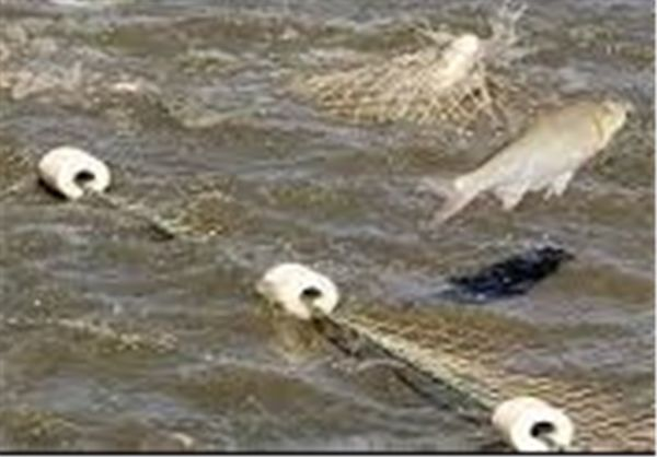 ۱۸۰۰۰ تن ماهی گرمابی در گلستان صید و روانه بازار میشود