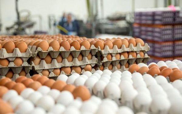 قیمت روز تخم مرغ در بازار (۹۹/۱۱/۱۱) + جدول
